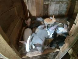 Vendo toda minha criação de coelhos