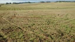 30 hectares de lavoura plantada em Dilermando de Aguiar