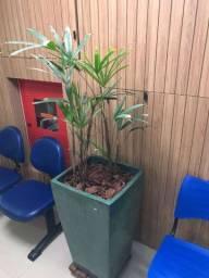 Título do anúncio: Vaso com planta