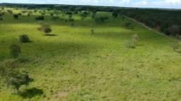 Fazenda 512 hectares em livramento