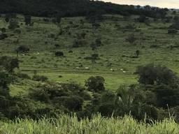 Fazenda de 146 alqueires para pecuária