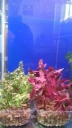 Aquário, plantas, naturais, aquáticas, vivas, plantados, low tech