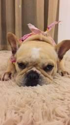 Bulldog fêmea para cruzar