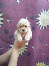 Lindos Poodle Micro Toy