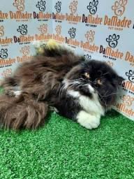 Título do anúncio: Gato Peesa Marilia