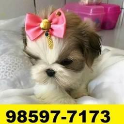Canil Filhotes Cães Premium BH Shihtzu Beagle Lhasa Maltês Yorkshire Poodle Pug