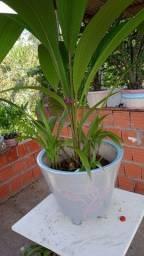 Flores e mudas de plantas