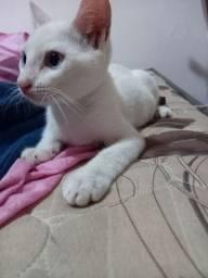 Gato filhote  extremamente fofo para adoção