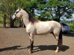 Cavalo marchador - mangalarga