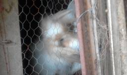 Hototi e fuzzy-mini coelhos