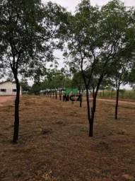 Fazenda à venda, 32000000 m² por r$ 3.600.000,00 - zona rural - bom jesus/pi