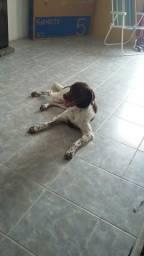 Hotel para cachorro em casa