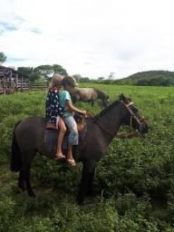 Cavalos Piquira