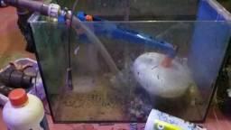 Sump aquário