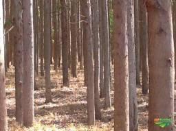 Vende-se Floresta de eucalipto.
