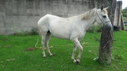Égua mineira