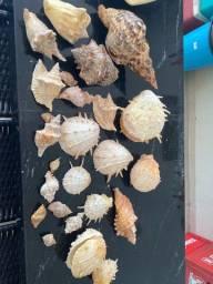 Vendo Conchas do mar
