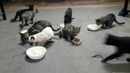 Gatos adultos mansos