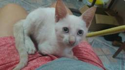 Doa-se essa gatinha linda!!
