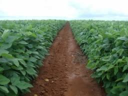Fazenda para agricultura de 2.610 alqueires