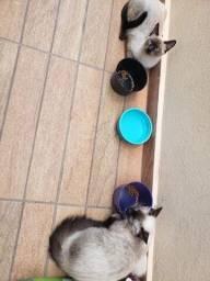 Gatos - Doa-se irmãos