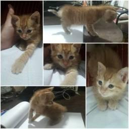 Adoção responsável de gatinha.