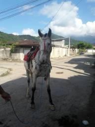 Vendo cavalo apuzia