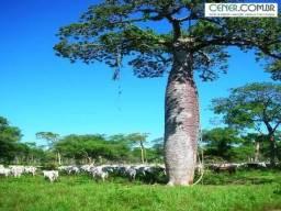 1202/Fazenda espetacular de 4.580 ha pronta para alta produção de pecuária