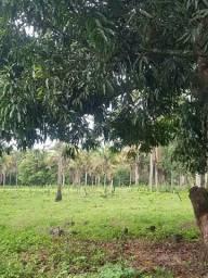 Fazenda a 18 km de imperatriz pego imovel