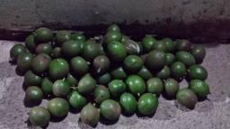 Vende-se abacates