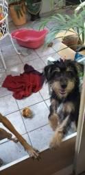 Doa-se um lindo cachorrinho medio porte srd9macho)