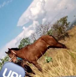 Cavalo pra vender ou gambirar 4 anos
