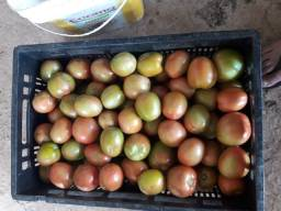 Vendo tomates Brs Nagai