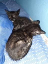 Doa-se 2 gatos macho
