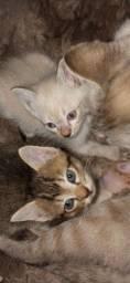 Doa se filhotes de gatos