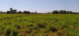 Fazenda com 1 dormitório à venda, por R$ 6.075.000 - Zona Rural - Ji-Paraná/RO
