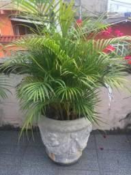 Palmeira com vaso