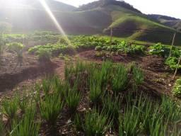 Verduras ( couve , mustarda , almeirão , cebolinhas e alguns alface ) Orgânicos