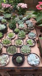 Plantas ornamentais e aquática