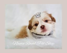 Título do anúncio: Shihtzu fofo macho #fotos originais# Namu Royal loja