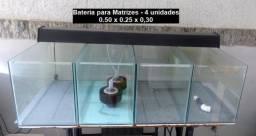 Bateria de Aquários para Reprodução de Peixes com Acessórios