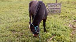 Vendo Cavalo ou negocio