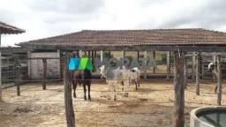 Fazenda à venda, 1 quarto, Zona Rural - São José Da Varginha/MG