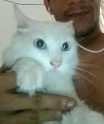 Doando esse gatinho