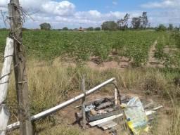 Terreno para granja 100 x 220 com cacimbão e energia na frente