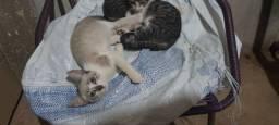 Doando esses gatinhos