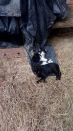 Doando dois gatinhos