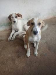 Cachorros para doação