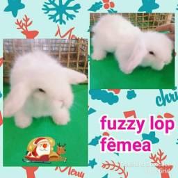 Mini coelho fuzzy lop reserva desmame 20/12