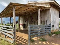 Rondônia fazenda a venda